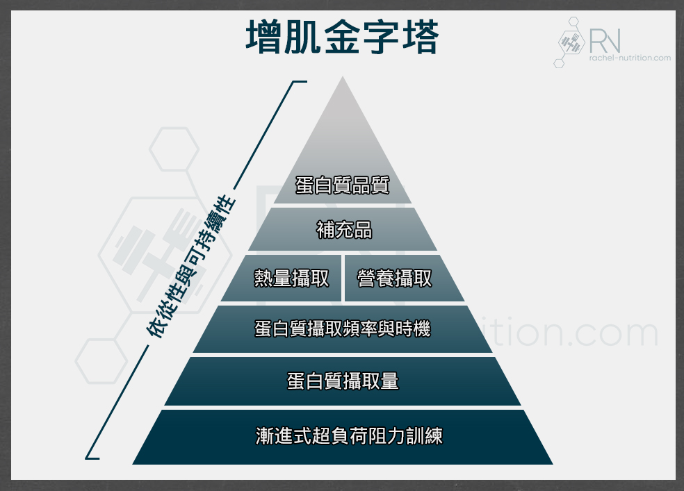 infographic_pyramid_muscle_large